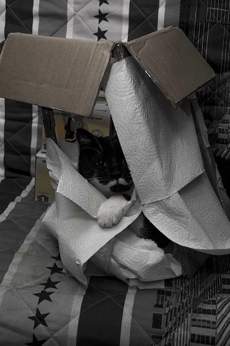 Chat dans la boite a lumiere