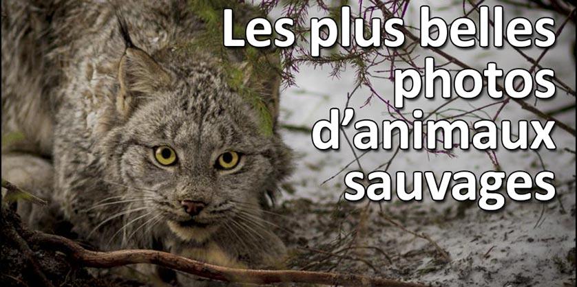 Concours Photo Animaux Sauvages - Les résultats