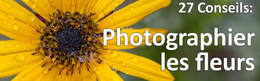 27 conseils pour photographier les fleurs