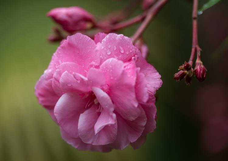 Comment bien photographier des fleurs