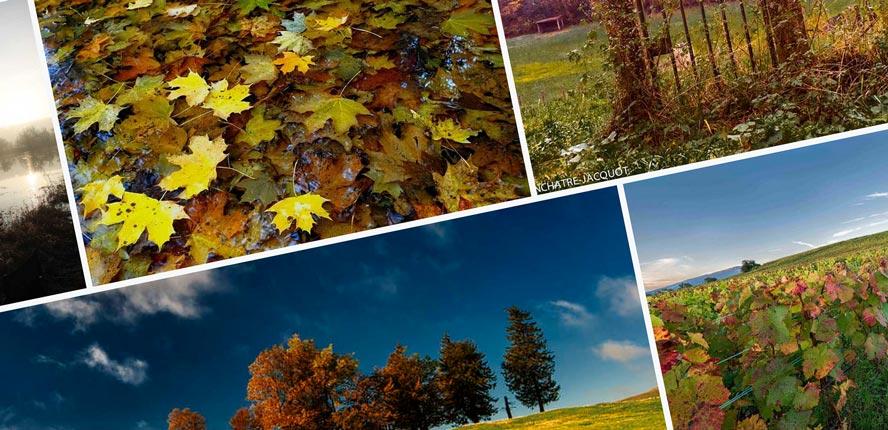 votez concours automne