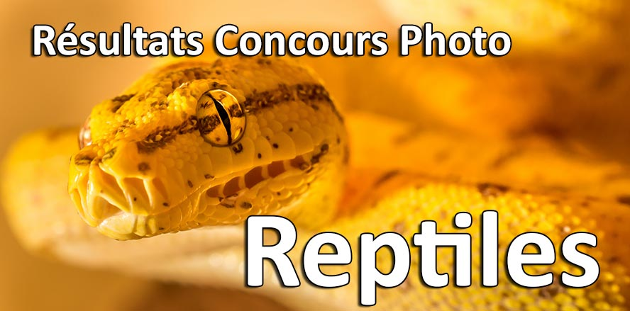 resultats concours photo reptiles