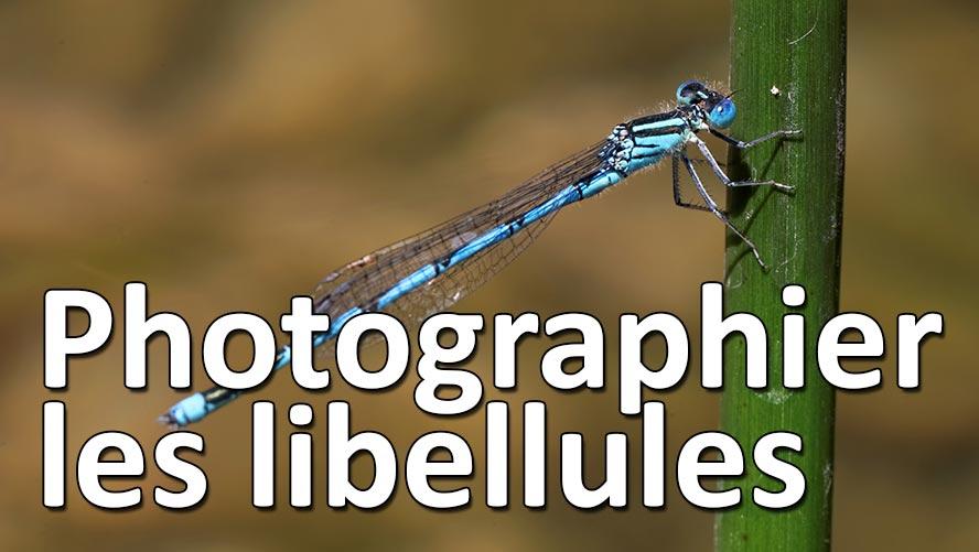 comment bien photographier libellules