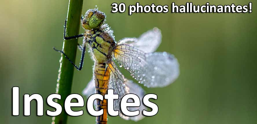 30-photos-hallucinantes-insectes-resultat-concours-photo