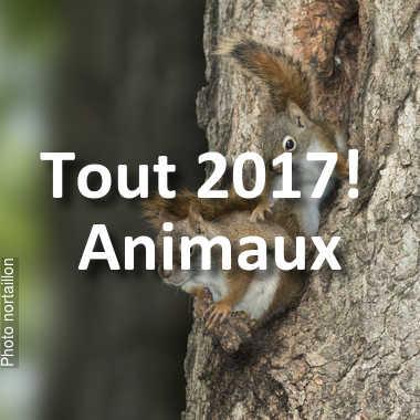 fotoduelo Tout 2017! - Animaux