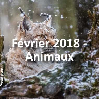 fotoduelo Février 2018 - Animaux
