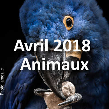 fotoduelo Avril 2018 - Animaux