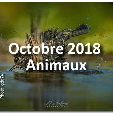 fotoduelo Octobre 2018 - Animaux