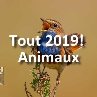 fotoduelo Tout 2019! - Animaux