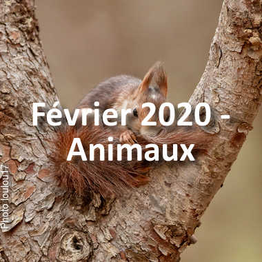 fotoduelo Février 2020 - Animaux