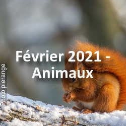 fotoduelo Février 2021 - Animaux