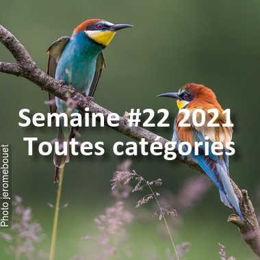 fotoduelo Semaine #22 2021 - Toutes catégories