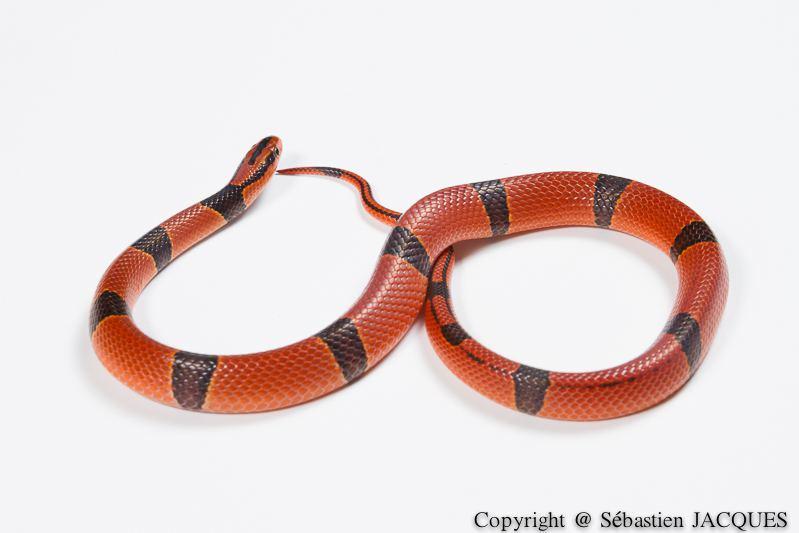 Concours Photo - Reptiles - Infiniment Reptile par sebastien_1664