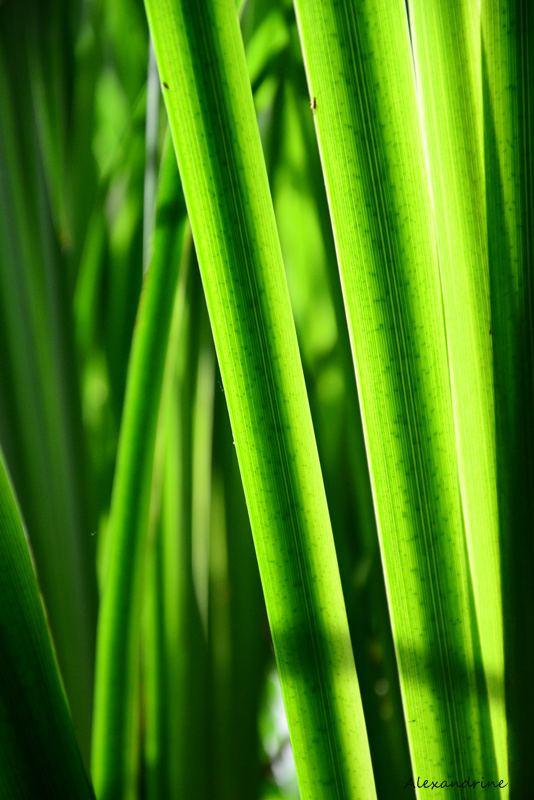 Concours Photo - Vert - jeux de lumiere ... par alexandrine