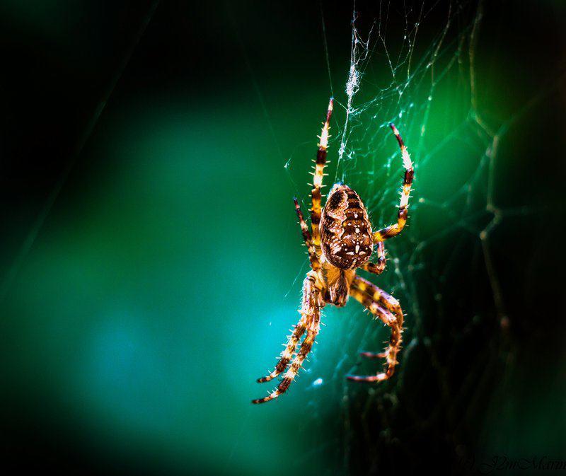 Concours Photo - Microcosmos - arachnide d'été par J2MMARIN
