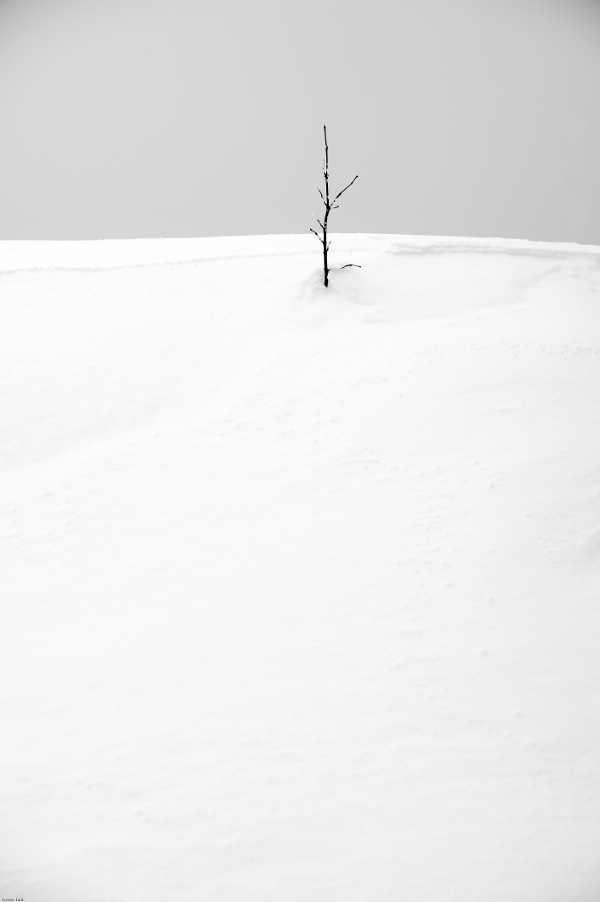 Concours Photo - Blanc - Le dernier Mohican par Tarik
