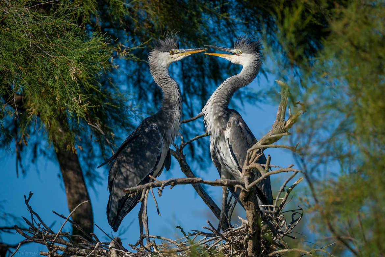 Concours Photo - Oiseaux - En plein débat par Jeppesen