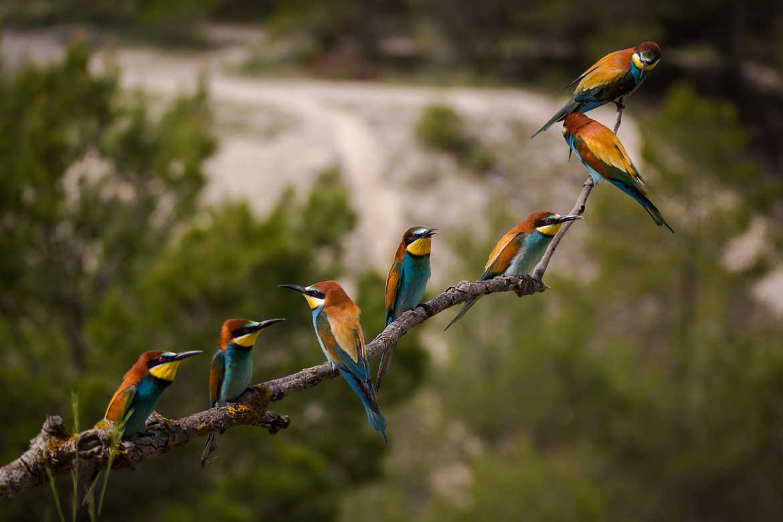 Concours Photo - Oiseaux - réunion à 7 par Thierry_4200