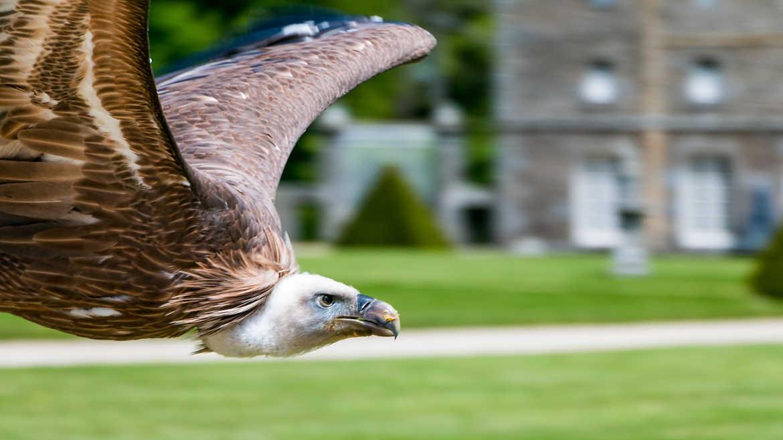 Concours Photo - Oiseaux - Ça plane pour moi ! par sylmorg