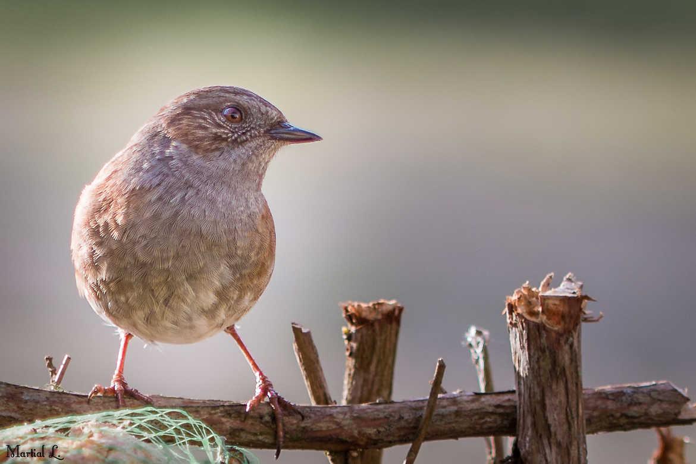 Concours Photo - Oiseaux - Profil droit par martial_lhermitte