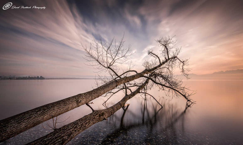 fotoduelo Tout 2016! - Nature et Paysage
