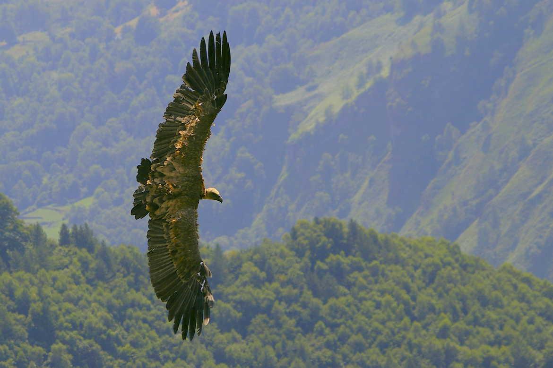 Concours Photo - Oiseaux - Dans le virage avant l'attaque par Joachim