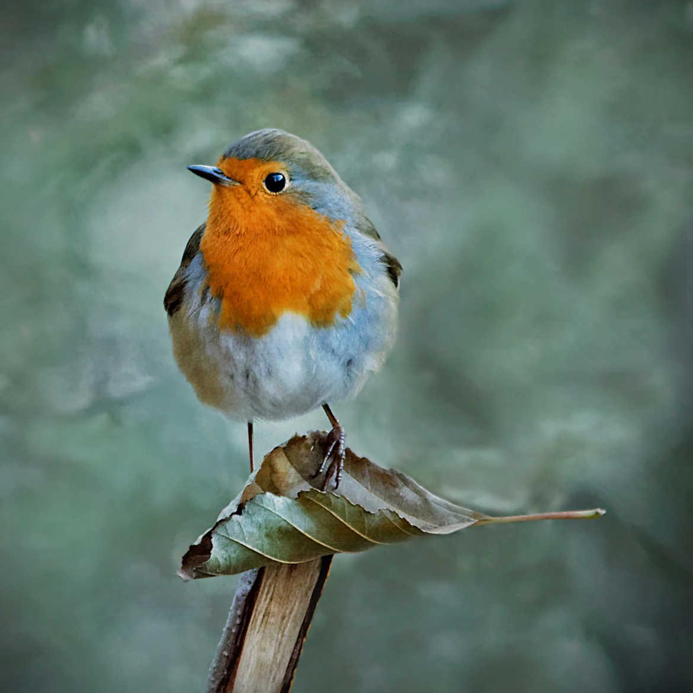 Concours Photo - Oiseaux - C'est MA feuille !! par Nikon78