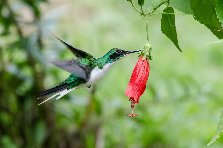 Concours Photo - Oiseaux - hummingbird par pguerin