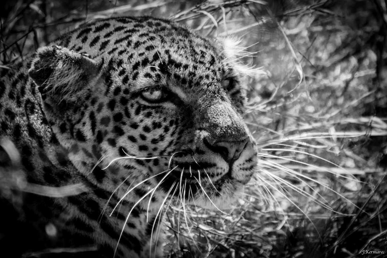 Le regard du chasseur