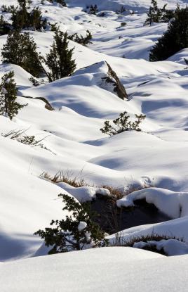 neige lirbat