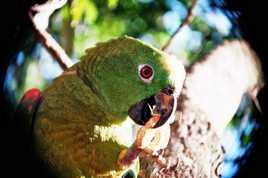 Gouter amazonien