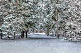 Forêt blanchie