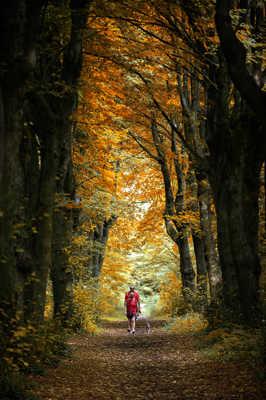 les ptits bonzommes rouges de la forêt