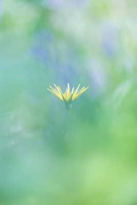L'esprit de fleur