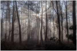 Brouillard en sous-bois
