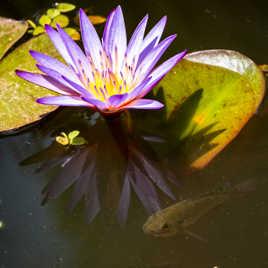 La faune et la flore de bassin