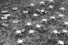 L'invasion des Arachnides