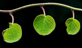 Trio végétal