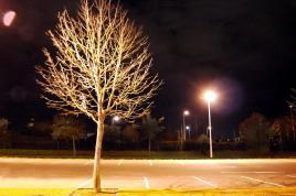 arbre sublimé au reverbère