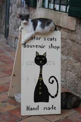 Souvenirs pour chats