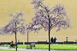 Sous les arbres en fleur