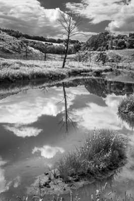 L'arbre sous l'eau