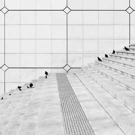 Les pigeons de La Défense