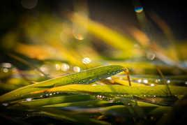 Magie du soleil et de la pluie