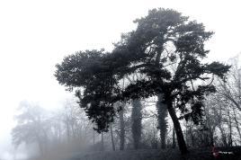 Le brouillard et l'arbre