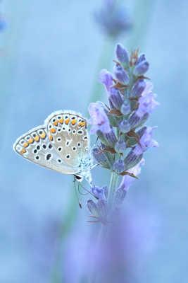 Le nectar.