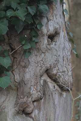 l'arbre sorciere