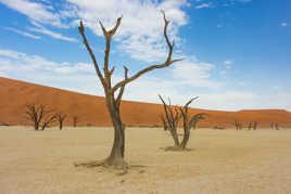 La quiétude du désert.