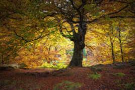 L'automne
