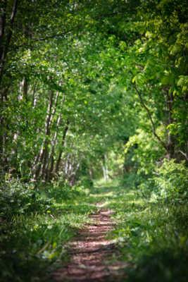 Chemin buissonier